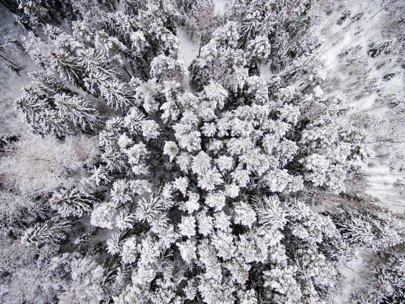 Вид с воздуха леса зимы от трутня стоковое изображение rf