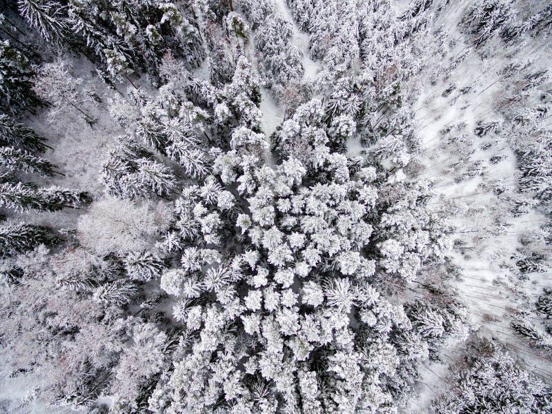 Вид с воздуха леса зимы от трутня стоковая фотография rf