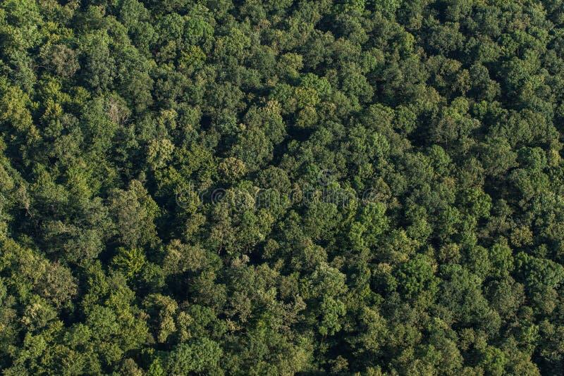 Вид с воздуха леса стоковое изображение rf