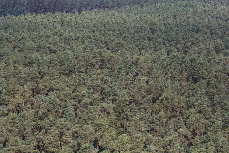 Вид с воздуха леса стоковое фото