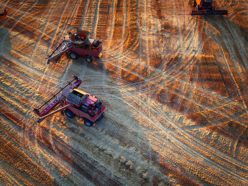 Вид с воздуха зернокомбайна на пшеничном поле сбора стоковые фотографии rf
