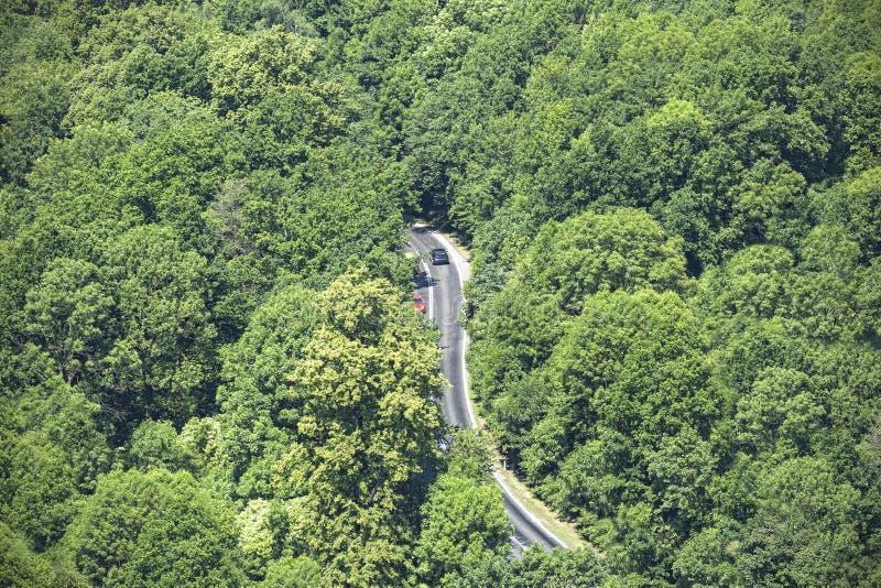 Вид с воздуха извилистой дороги через лес стоковая фотография