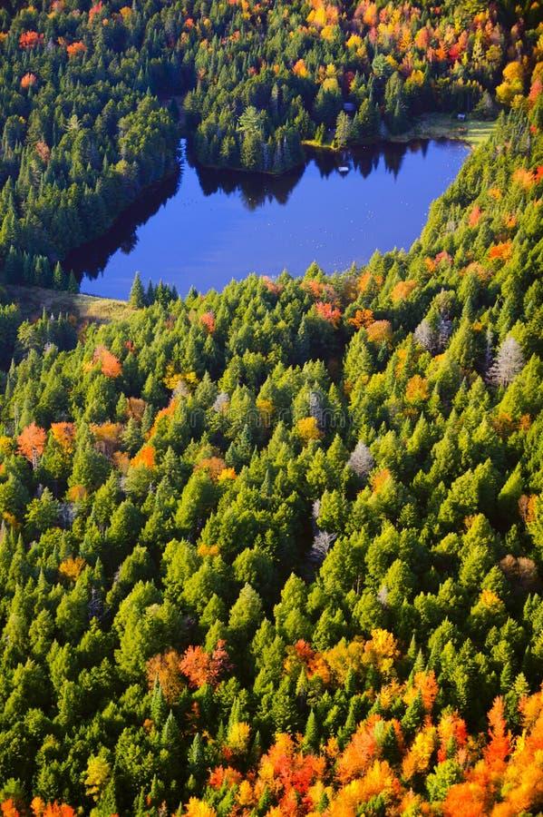 Вид с воздуха листопада в Вермонте стоковая фотография rf