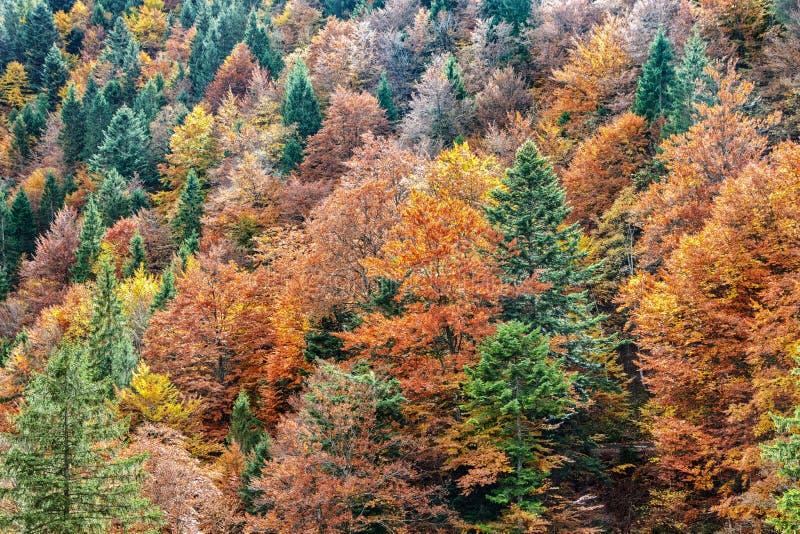 Вид с воздуха красочного леса осени стоковая фотография