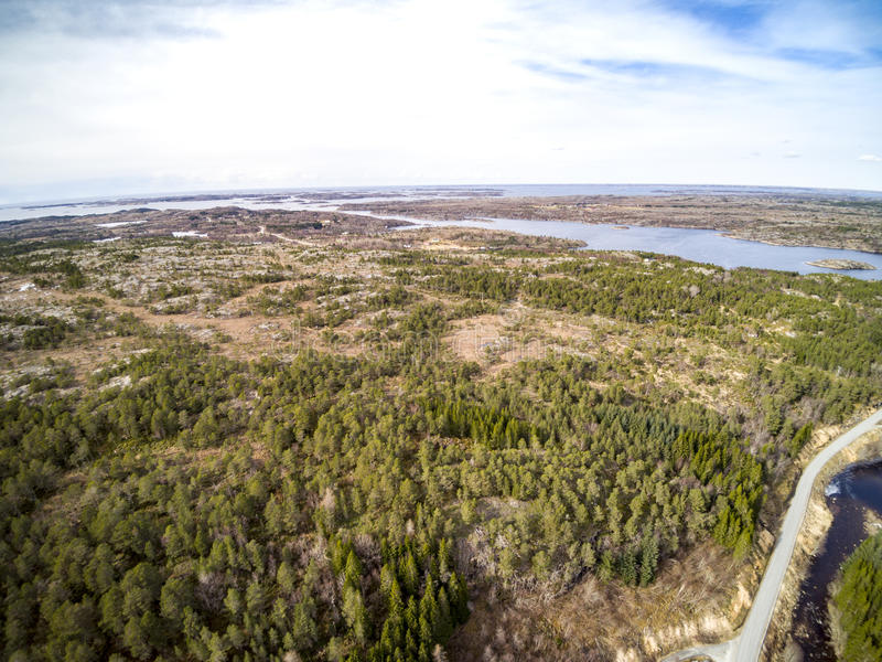 Вид с воздуха на зеленом елевом лесе стоковое фото