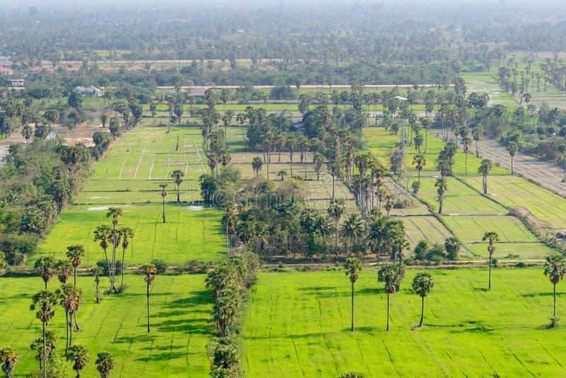 Download Вид с воздуха пальм сахара стоковое фото. изображение насчитывающей облако - 37931832