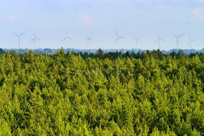 Вид с воздуха сосновой древесины и ветротурбин на горизонте стоковые изображения