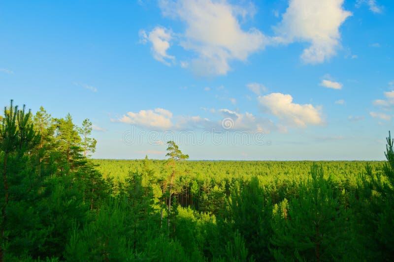 Вид с воздуха сосновой древесины стоковое фото rf