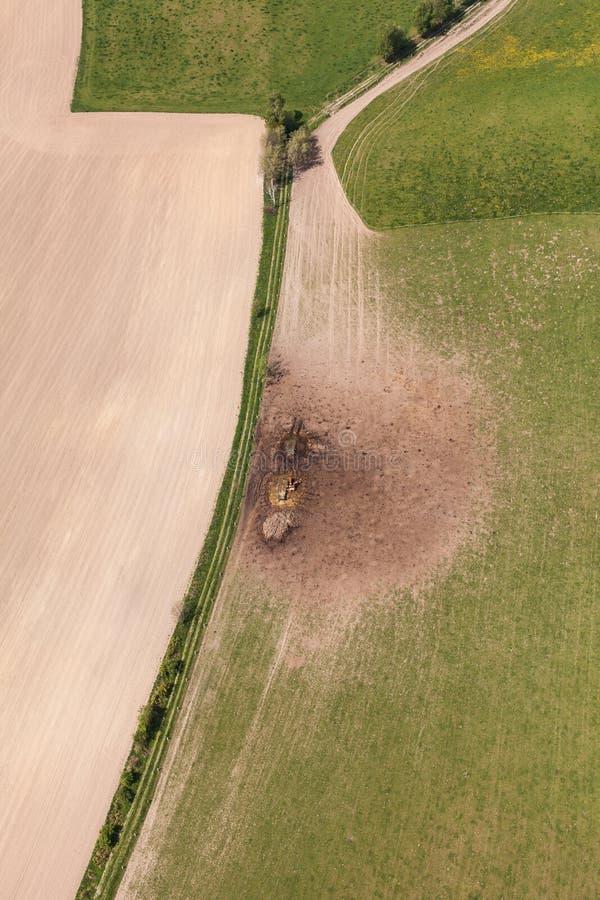 Вид с воздуха табуна коров на поле зеленого цвета лета стоковая фотография rf