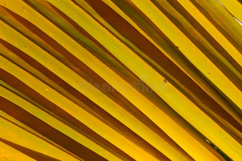 Вкосую картина высушенных лист кокоса для предпосылки или обоев стоковая фотография