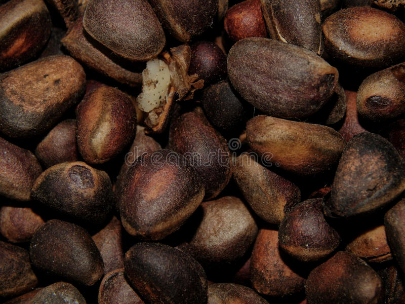 вкусная nuts сосенка стоковые фото
