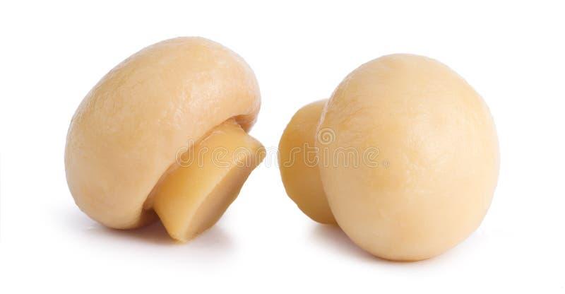2 вкусное Pickled marinated champignon грибов изолированный на белой предпосылке стоковое фото