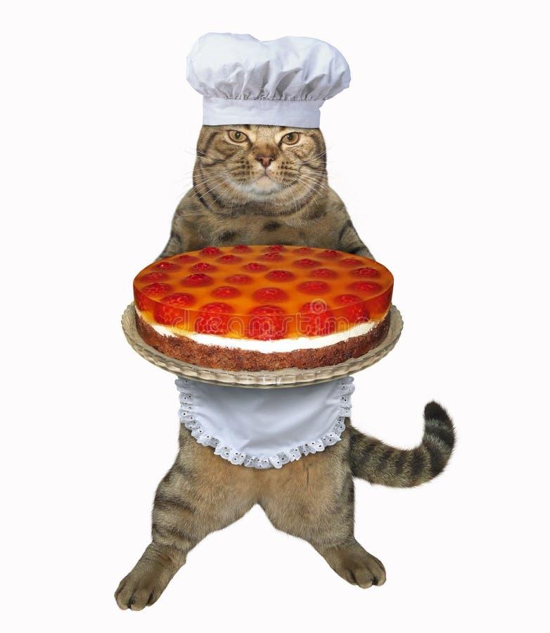 Владения шеф-повара кота торт плодоовощ стоковые фотографии rf