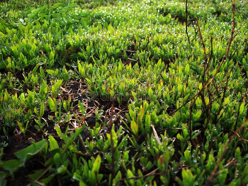 Влажная капелька травы утра стоковые фотографии rf
