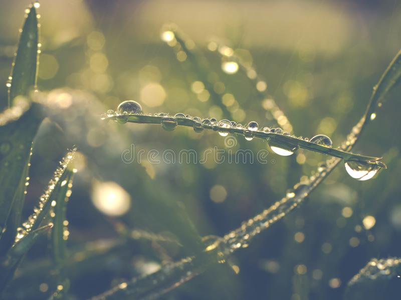 Влажная лужайка после полива стоковые фото