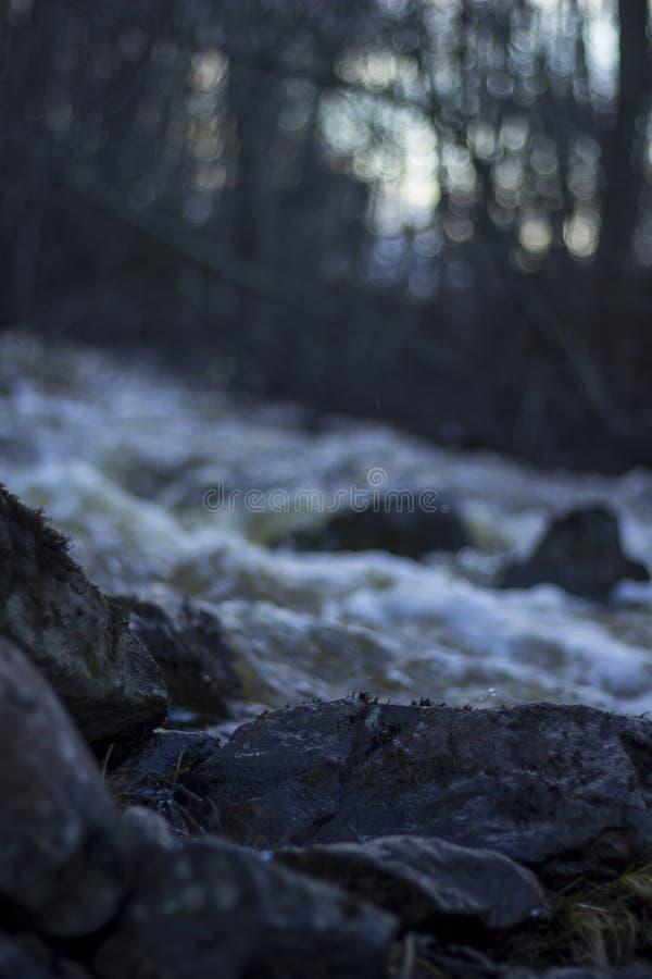 Влажные камни на переднем плане, поток весны обычно малого реки в лесе в северной Швеции стоковое изображение