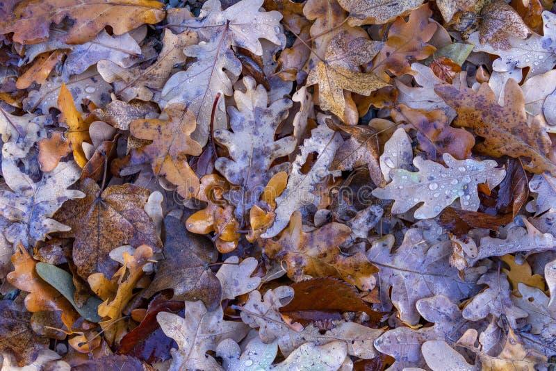 Влажные листья осени стоковые изображения rf