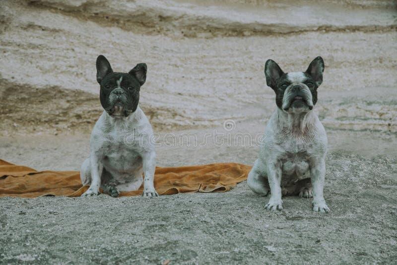 Влажные собаки на пляже стоковые изображения