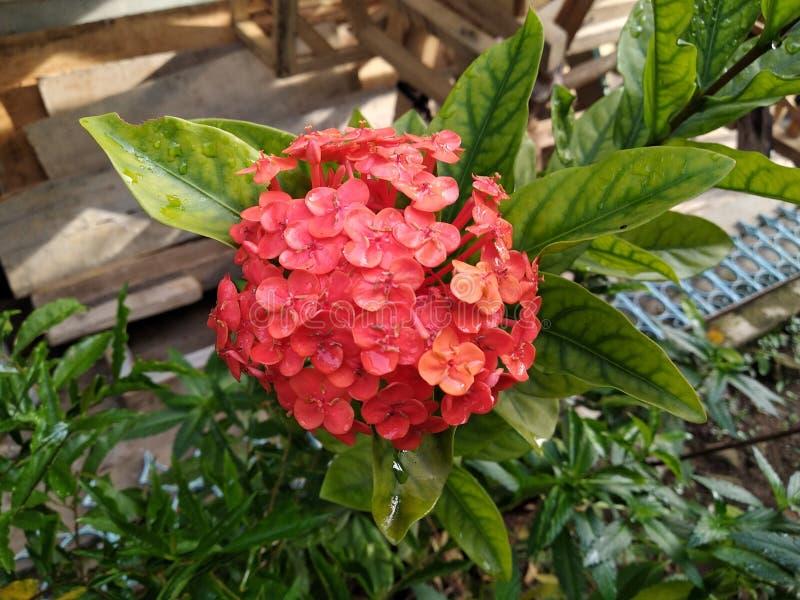 Влажные цветки стоковое фото