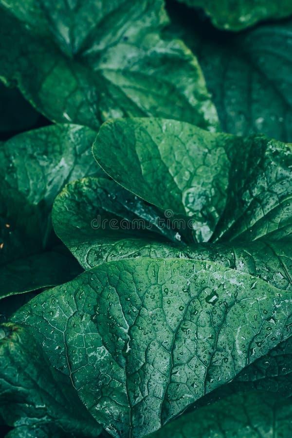 Влажный зеленый дикий цветок лилии воды выходит после дождя с падениями воды Ботаническая предпосылка растительности природы Плак стоковые изображения rf