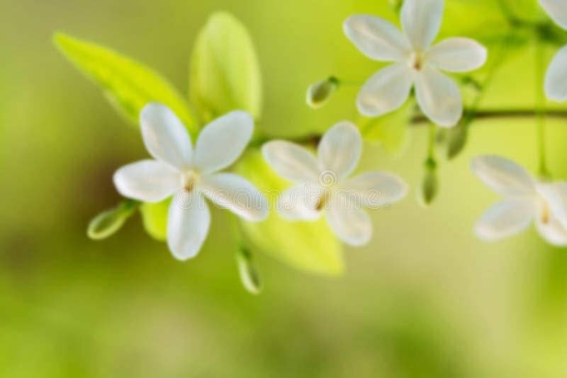 влияние нерезкости предпосылки 50mm горит сторону партии nikkor ночи Белый цветок запачканный в зеленой предпосылке стоковое изображение rf