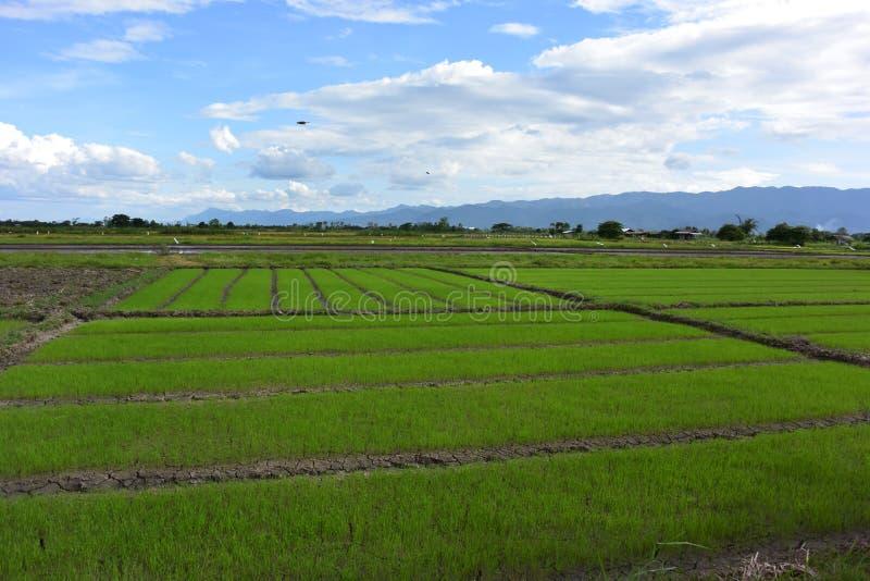 Влюбленность зеленой фермы стоковые фотографии rf