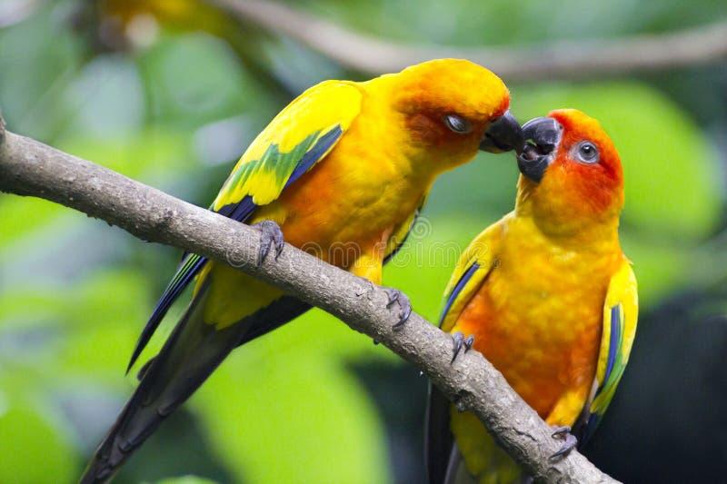 влюбленность птиц стоковые изображения