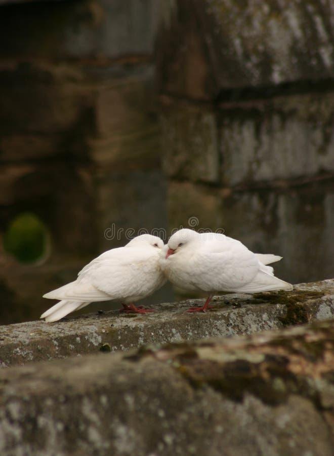 влюбленность птиц стоковое изображение