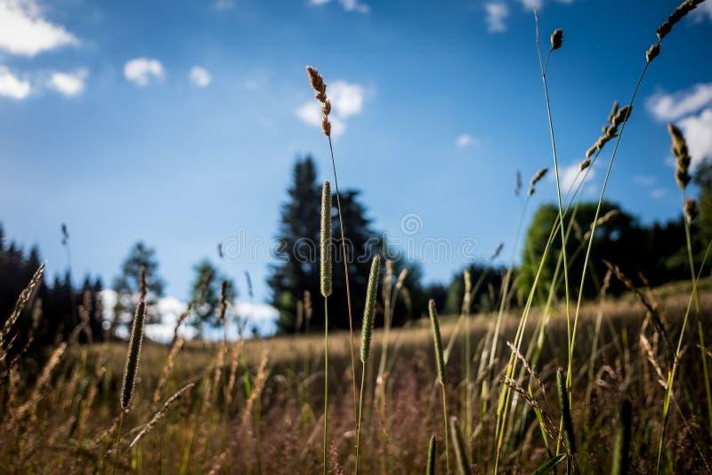 Внешнее солнце травы стоковые изображения