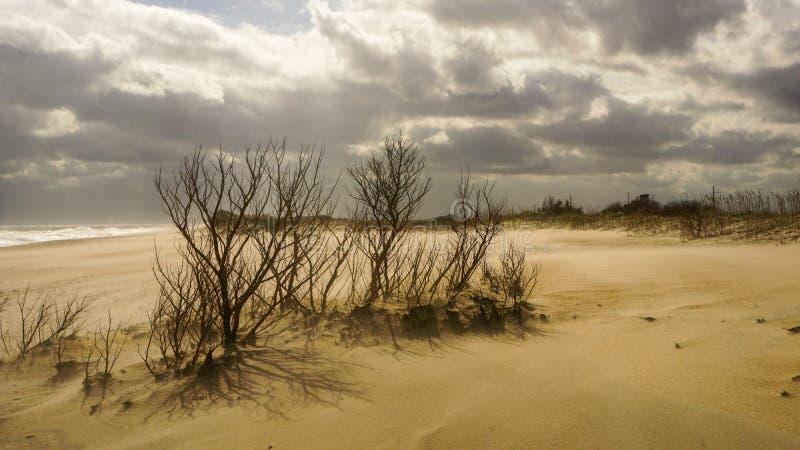 Внешние банки прибрежных районов Хаттерас Северная Каролина стоковые фотографии rf
