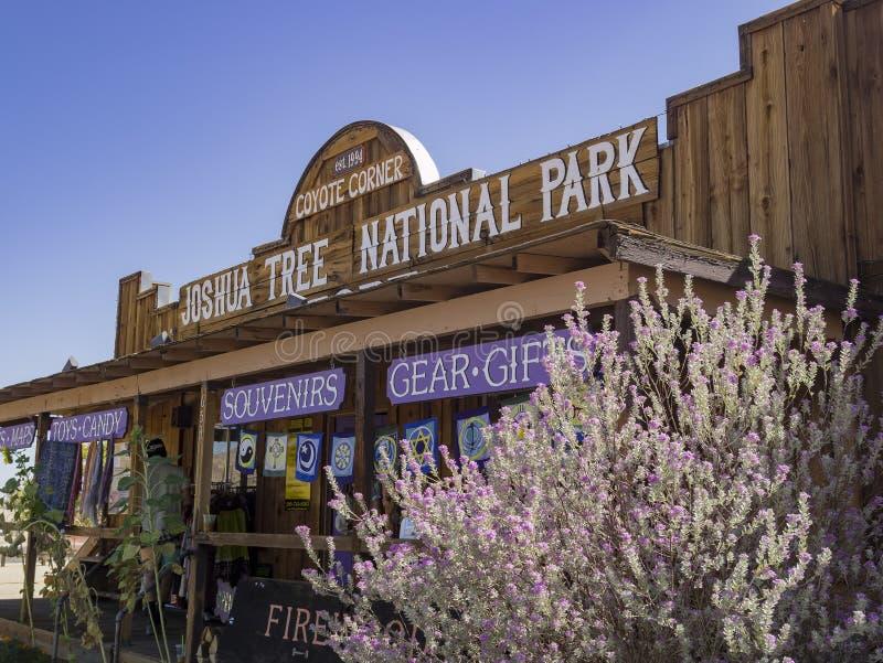 Внешний взгляд угла койота в национальном парке дерева Иешуа стоковая фотография