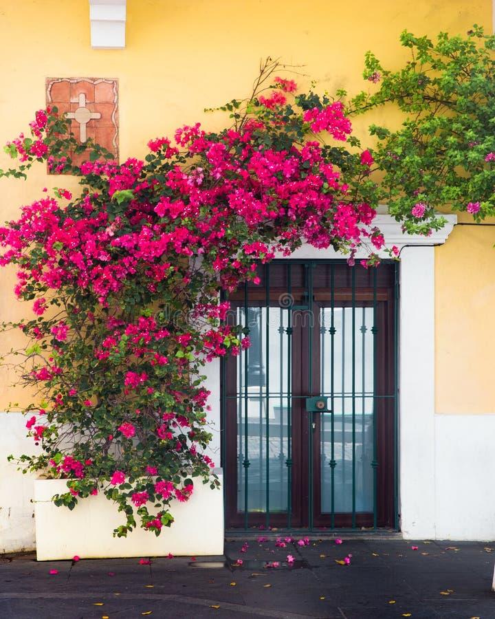 Внешняя дверь предусматриванная в цветя лозах на желтом здании стоковые фото