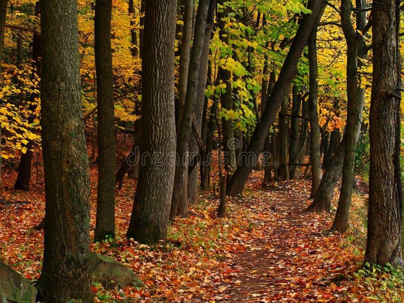 Внешняя отслеживая - путь леса - сцена падения стоковое фото rf