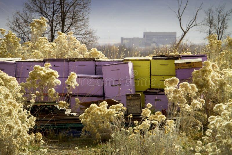 Вне осенью занятые цвета стоковые изображения rf