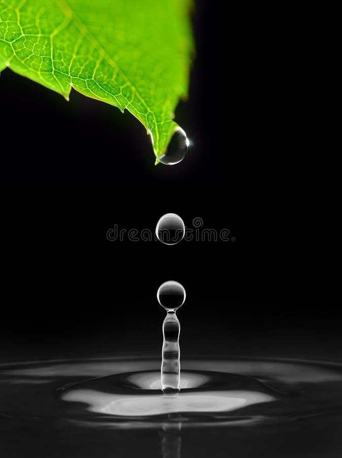 вниз падает падая вода листьев стоковое изображение rf