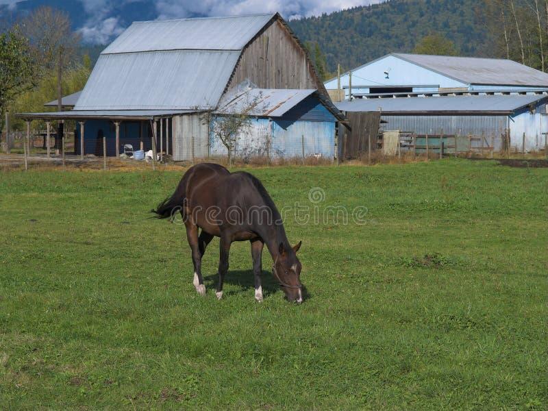 вниз ферма стоковое изображение rf