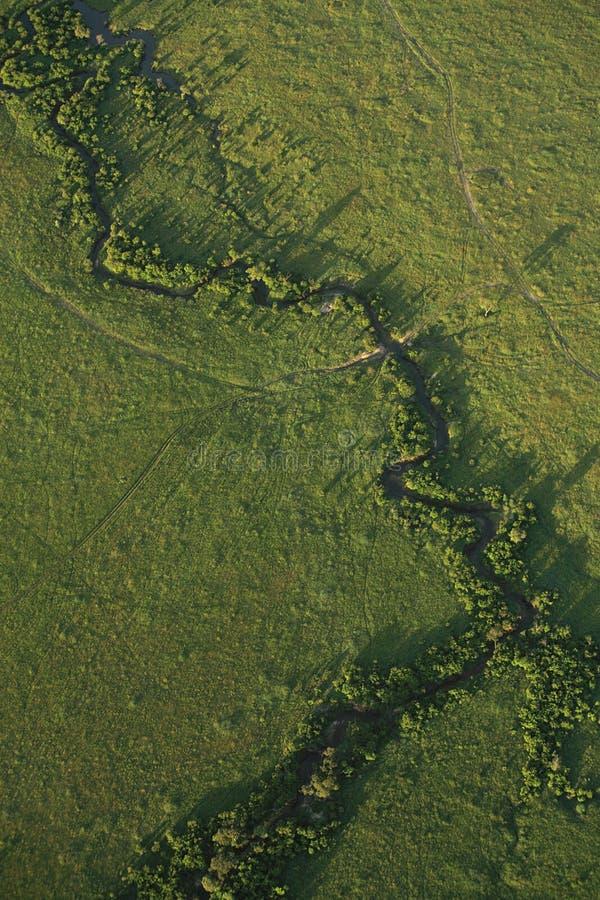 вниз masai mara на взгляд стоковые изображения rf