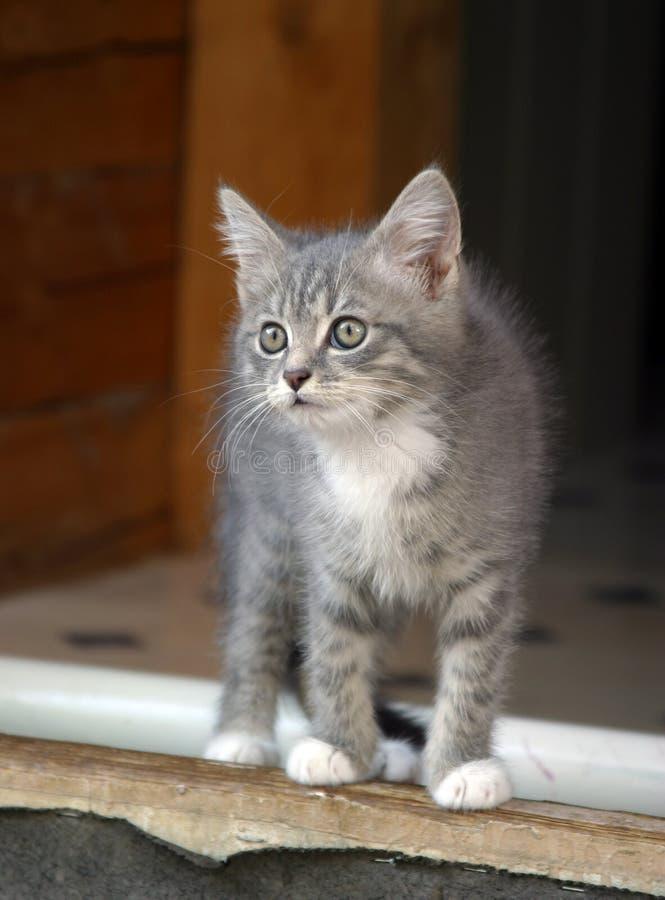 внимательный котенок стоковые изображения