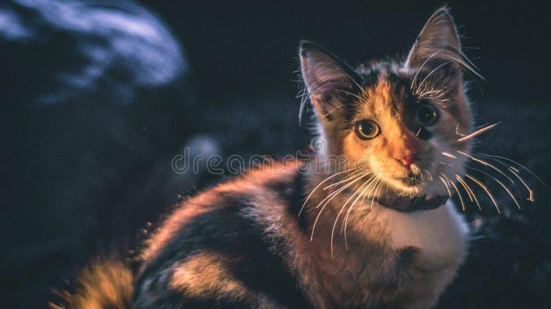 Внимательный кот в солнце стоковые изображения rf
