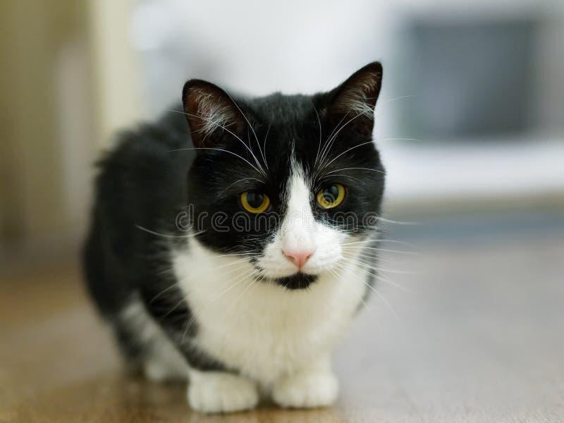 Внимательный кот стоковые изображения rf