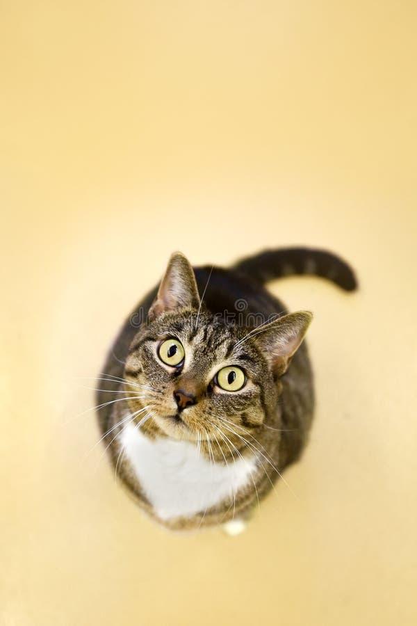 внимательный кот стоковое фото rf