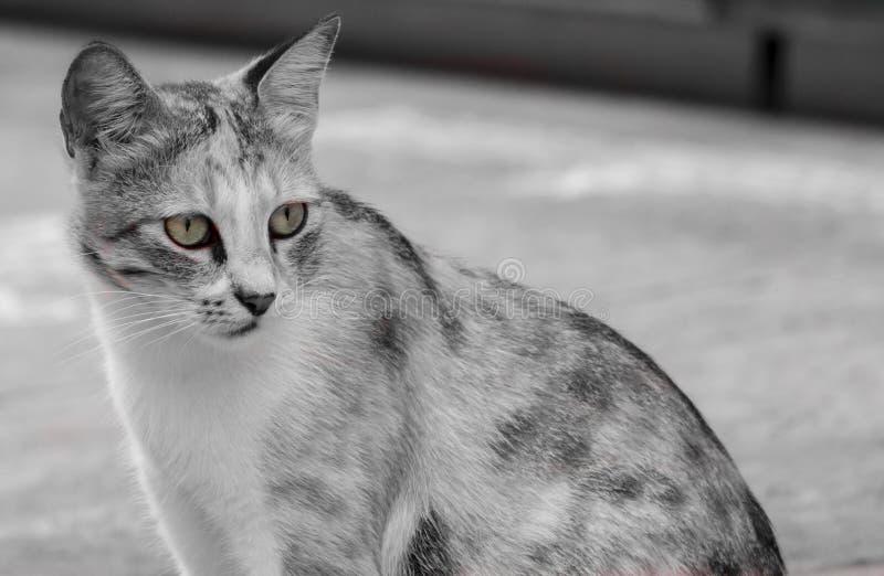 Внимательный кот стоковые фотографии rf