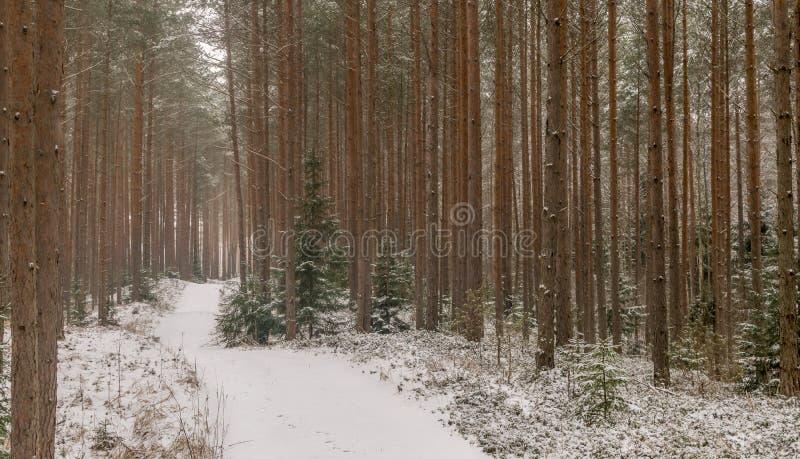 Внося в журнал путь или дорога через лес в снеге стоковое фото rf