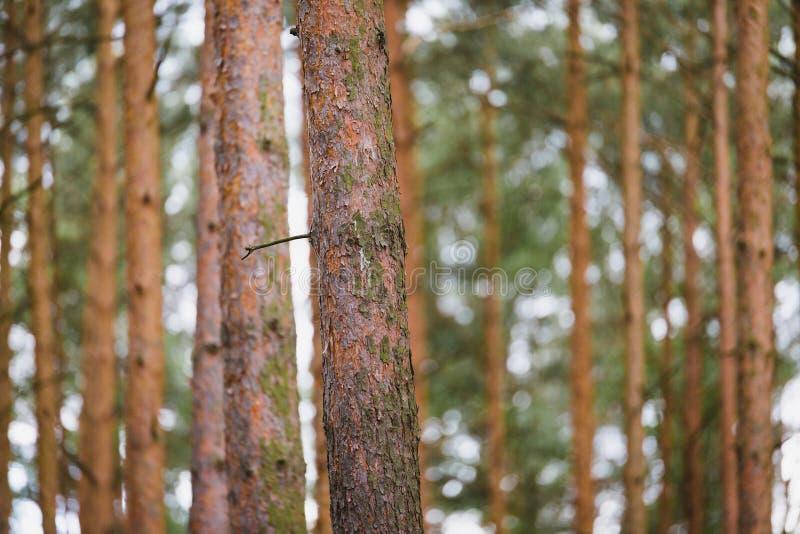 Внутренние лесные деревья стоковые фотографии rf
