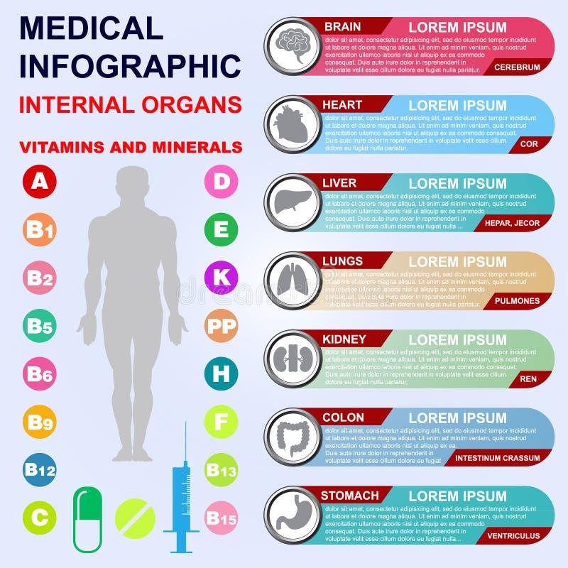 внутренние органы Витамины и минералы иллюстрация штока