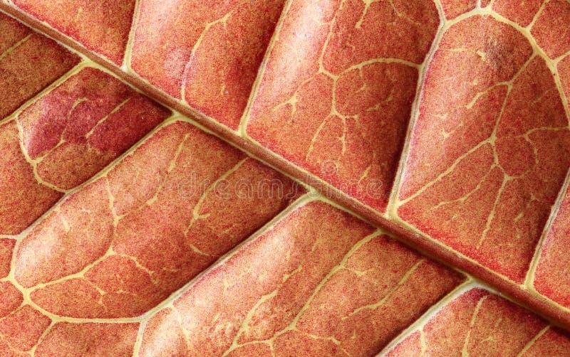 Внутренность заводов Croton лист - вне стоковое фото