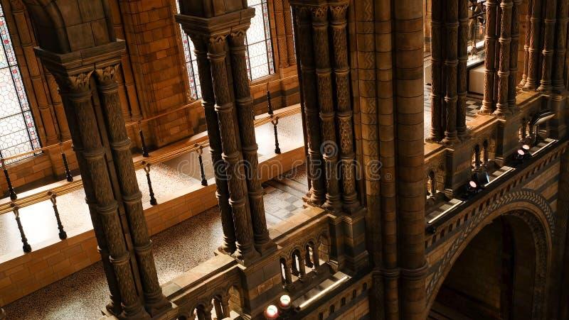 Внутренняя архитектура и украшение музея естественной истории, центр Великобритании собраний высокого профессионализма в таксоном стоковые фото