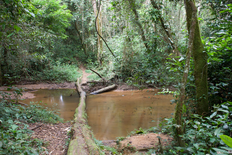 Внутри африканского тропического леса стоковая фотография rf