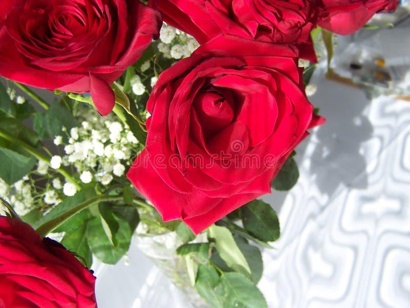 Внутри открытой розы стоковые изображения rf