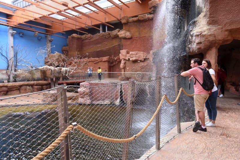 Внутри современного афририума с искусственным водопадом в зоопарке Ð'Ñ€ стоковое изображение